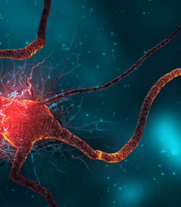 Study Suggests Cannabis Supports Growth of New Brain Cells