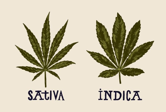 Sativa and Indica are Dead. Long Live the Chemovar