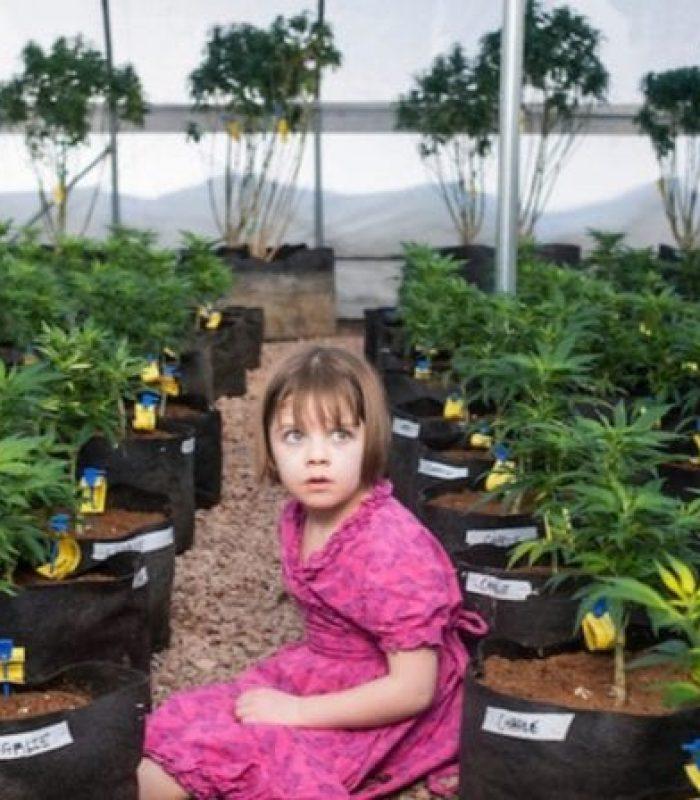 Ten CBD-Rich Cannabis Strains