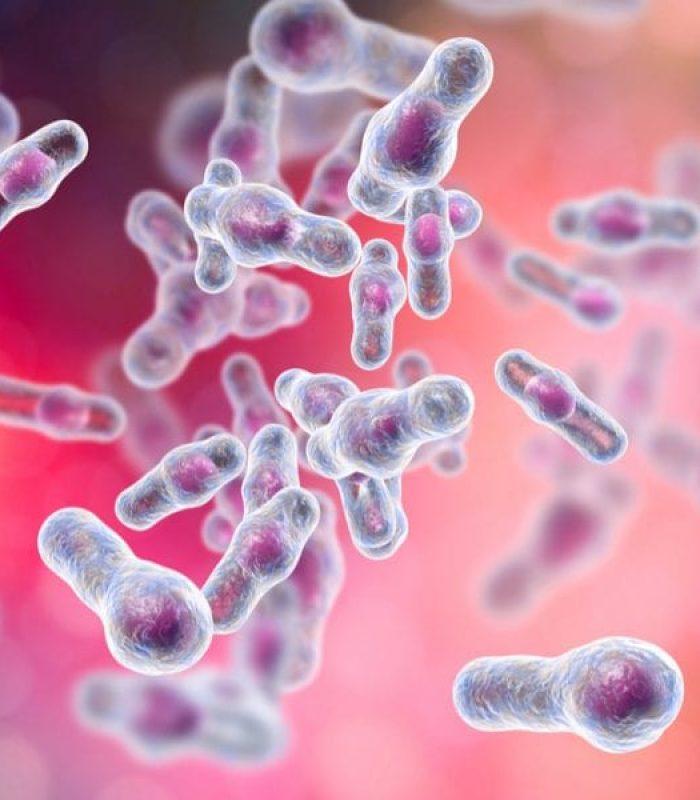 CBD In Gut Cells