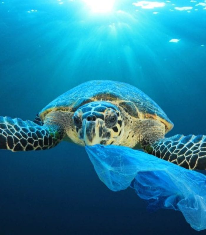 What if Hemp Plastic is Not Able to Save Us?