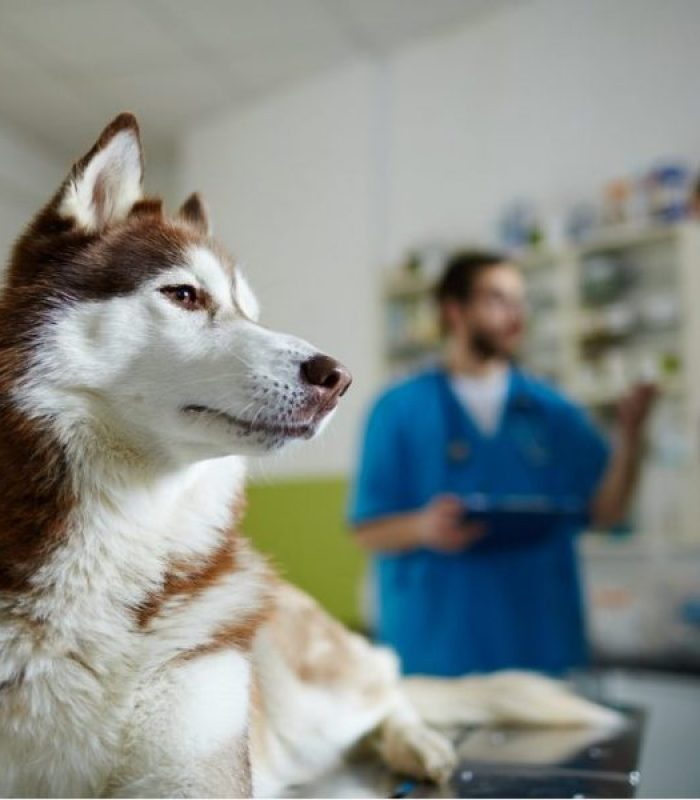 Veterinarians Say Yes To Some Cannabis Products for Pets