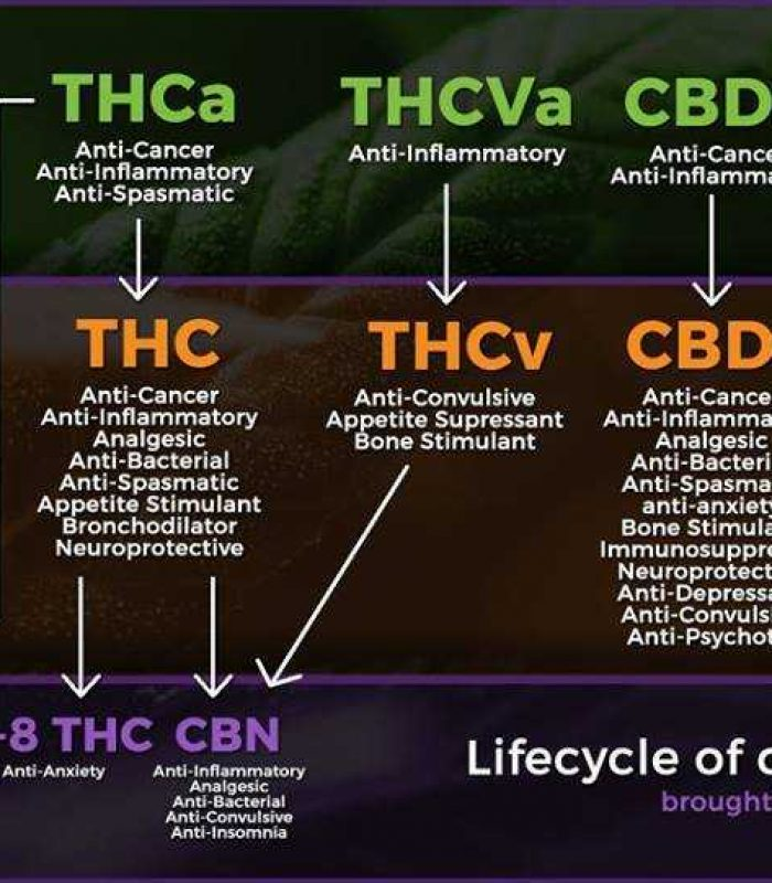 How Many Cannabinoids Are There In The Cannabis Plant?