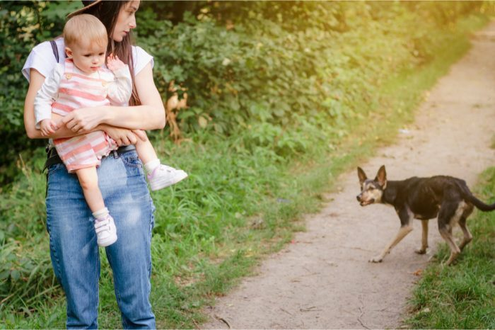 Reducing Animal Aggression with CBD?