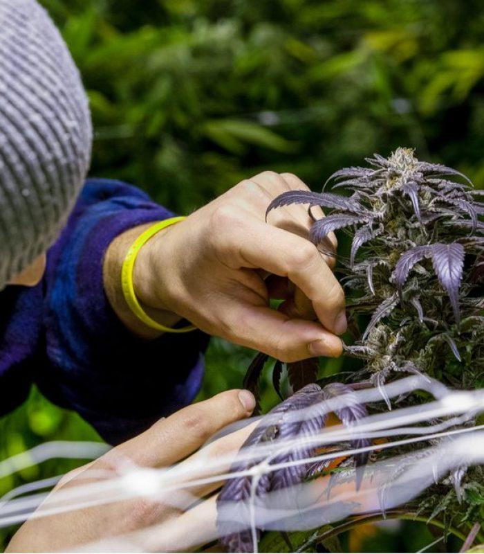 How the Black Market has Shaped Modern Farming Technology