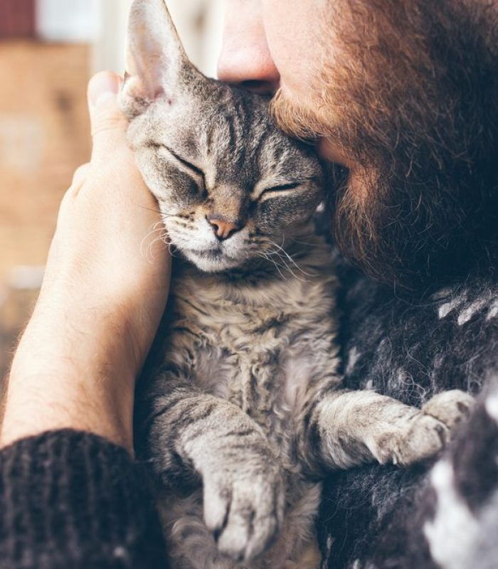 CBD For Cats Is Trending But Is It Safe?