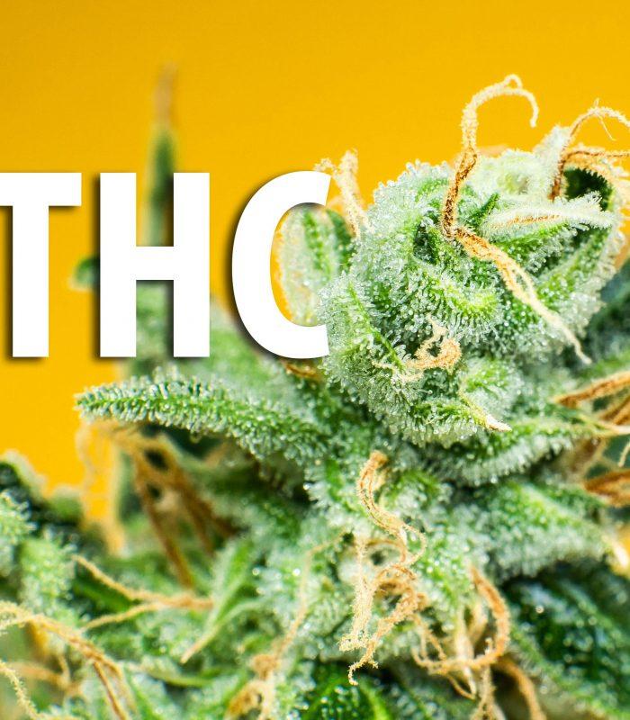 Top 10 Benefits of THC