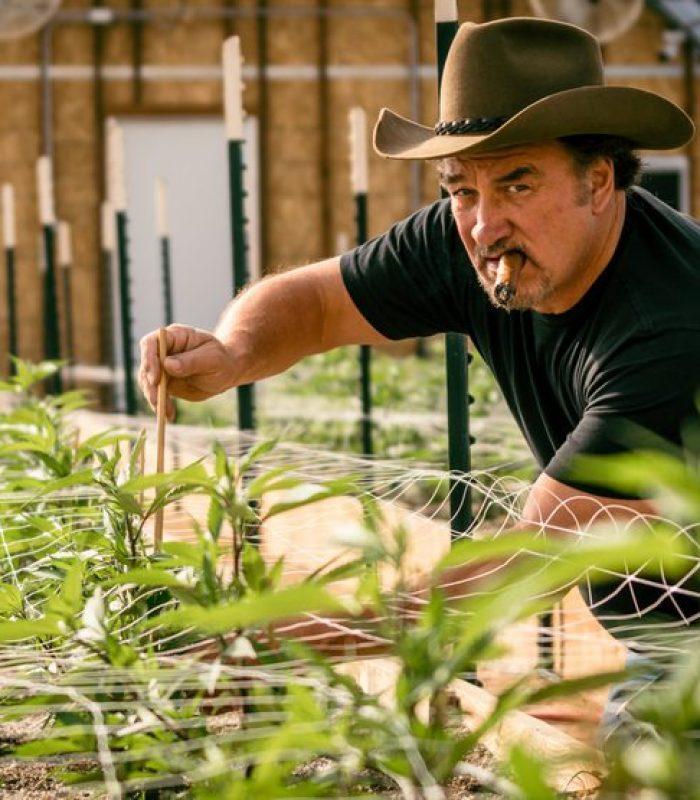 Jim Belushi Talks Cannabis At Amsterdam CCC