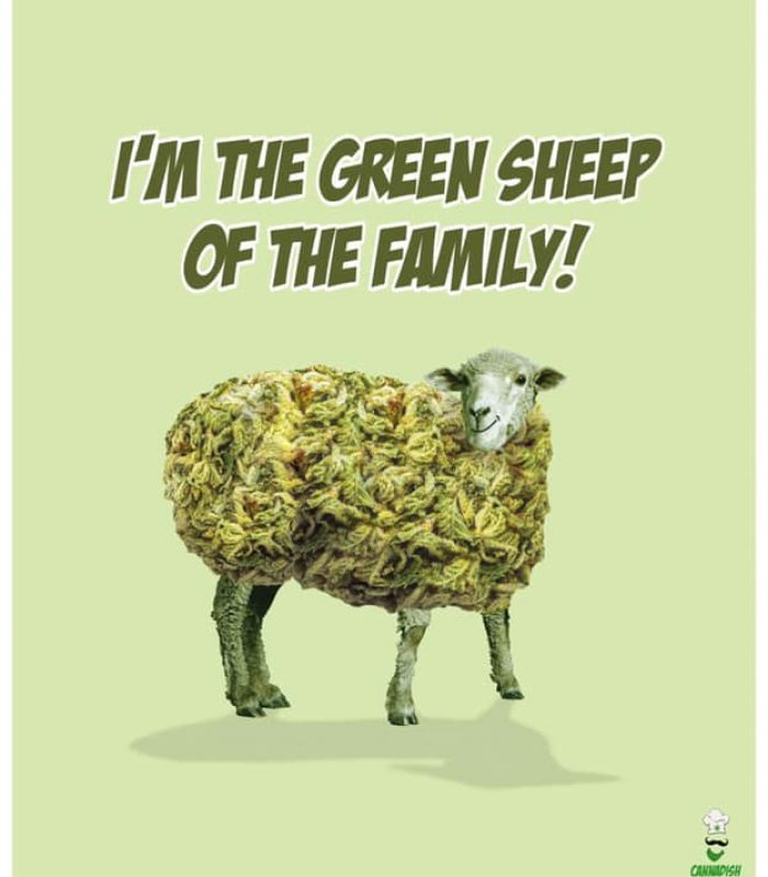 """Being The """"Green Sheep"""" Of The Family Can Be Hard"""