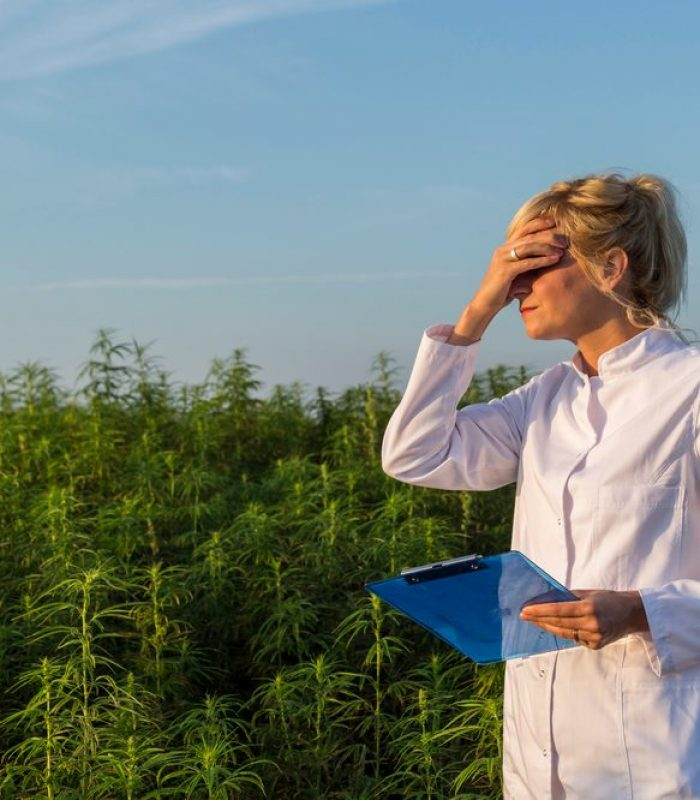 How Can U.S. Researchers Get Good Data When They Can Only Access Bad Weed?