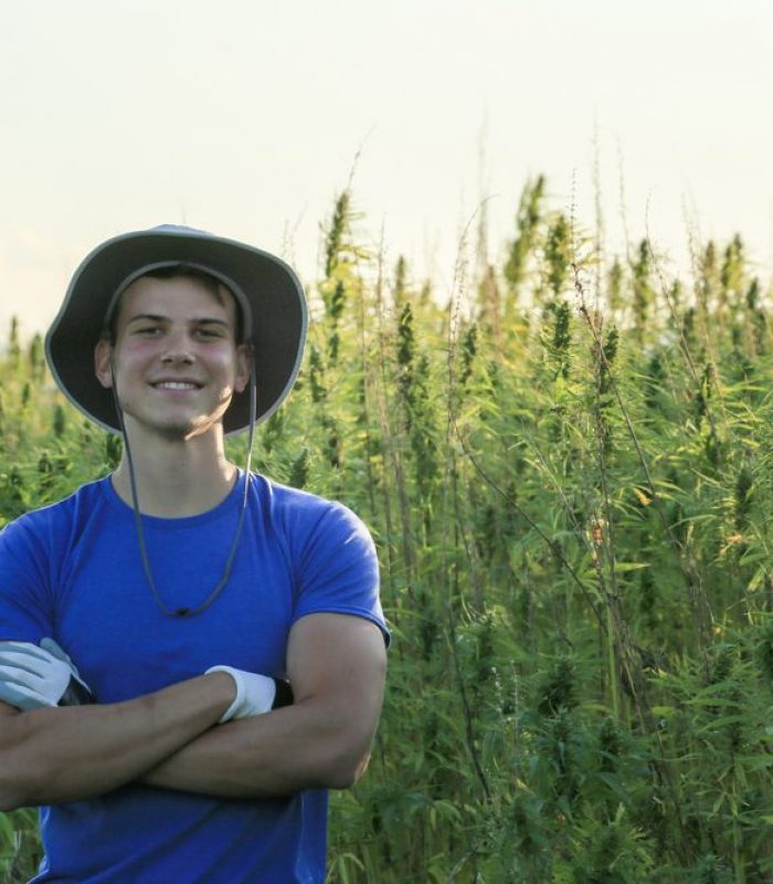 When Hemp Gets Stressed It Makes More THC Like It's Self Medicating