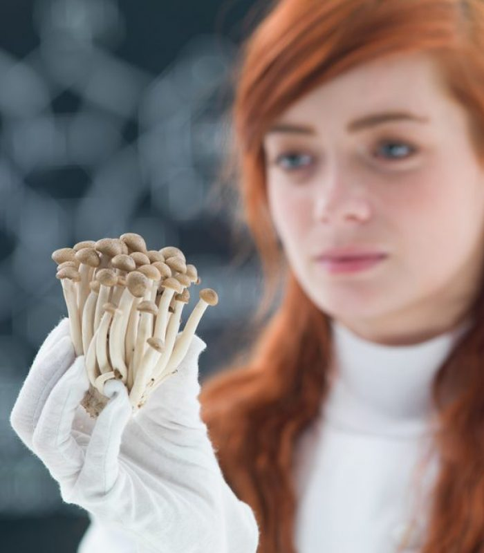 New Medicinal Combinations of Mushrooms and Cannabis