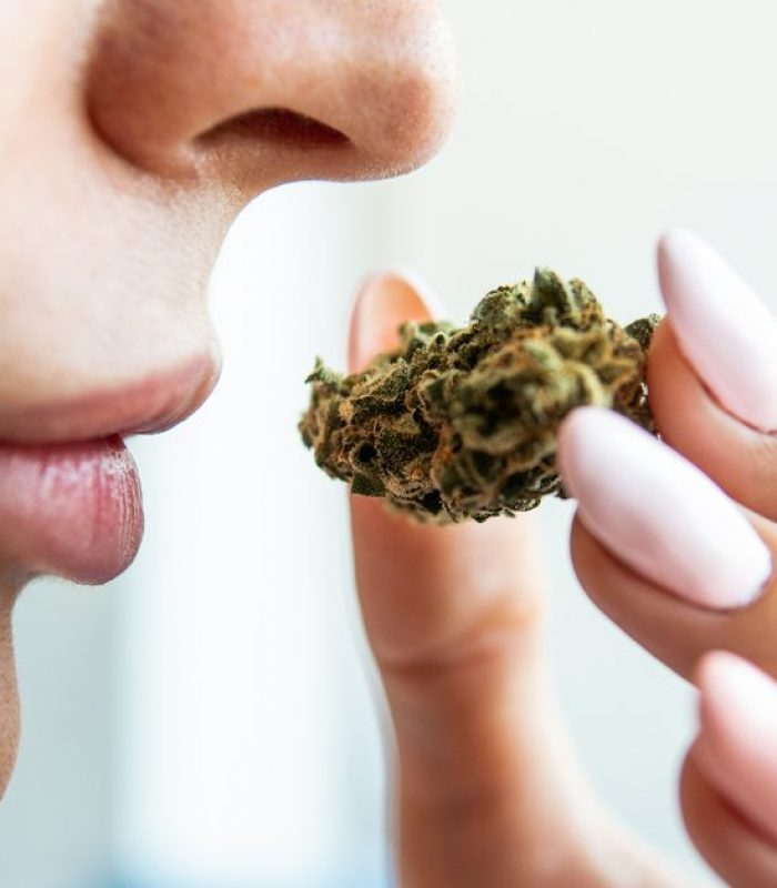 How Does The Cannabis Plant Get Its Terpene Content?