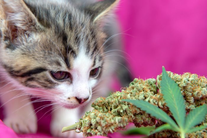 What is the Best Pet Cannabis Treatment for Your Furry Friend?