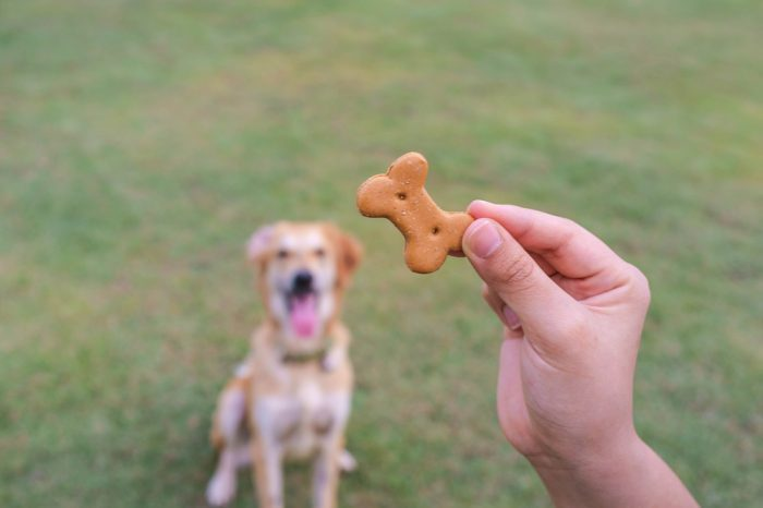 CBD Treats for Dogs are Easy to Make and Ensure Proper Dosing