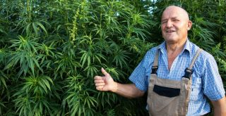 micro grown cannabis represented by white farmer in overalls giving thumbs up next to hemp plant